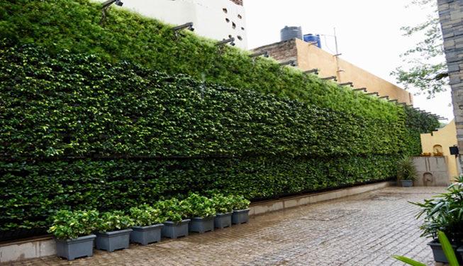 omini_green_green_wall_tresgreen